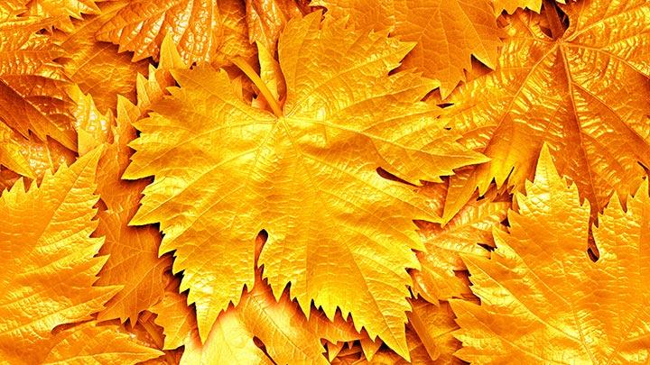 DIY-Herbst-Ideen ©Fedorov-Oleksiy-shutterstock_152907257