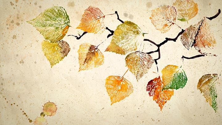 Herbst-Ideen ©IRINA-OKSENOYD-shutterstock_314859053