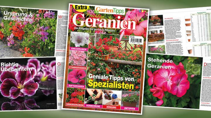 Garten-Tipps Extra: Prächtige Geranien – 01/2020