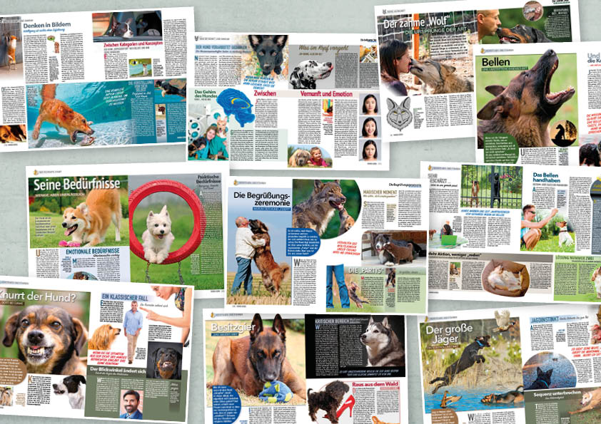 Der große Hunde-Guide: Im Kopf des Hundes – 02/2020