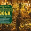 Grünes Gold - Real Crime Sonderheft Narcos weltweit – 02/2020